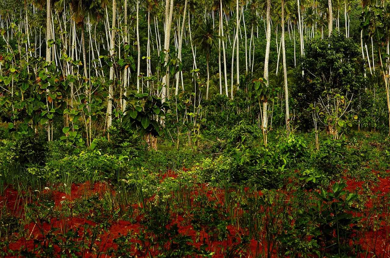 Quanti alberi ci sono nel mondo la plumeria for Quanti deputati ci sono