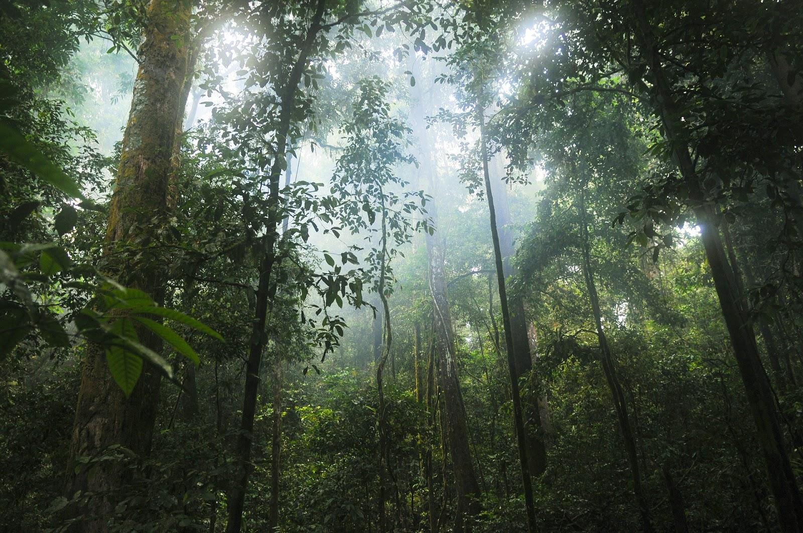 Biodiversità tropicale