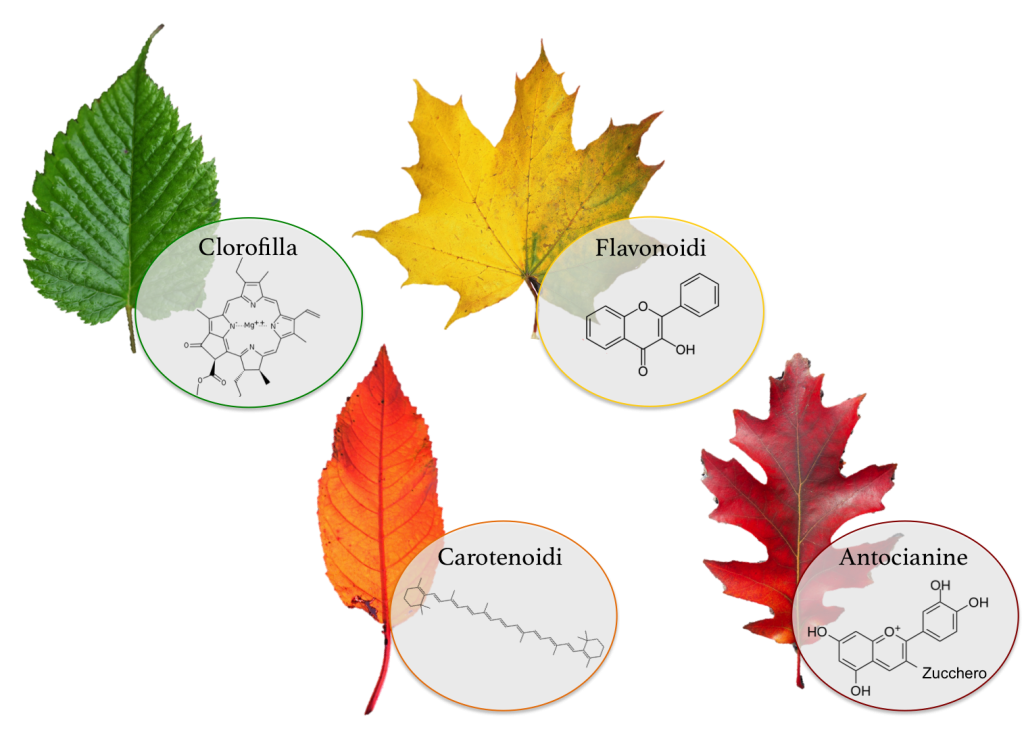 pigmenti foglie colori autunno