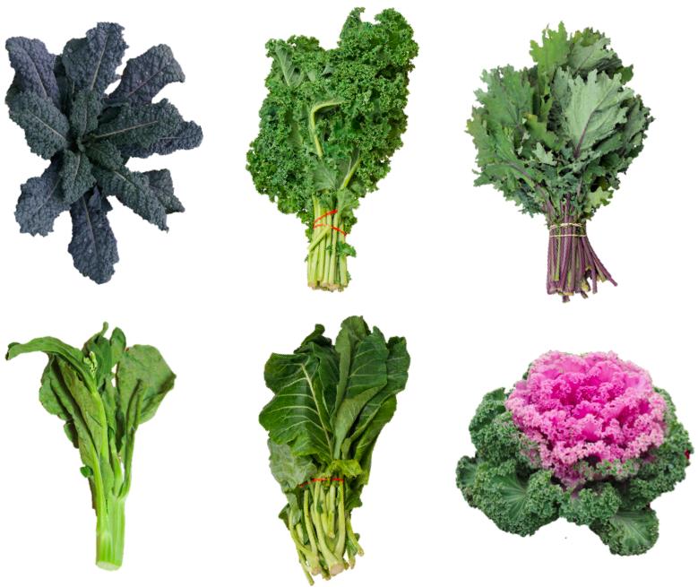 Brassica a foglia cavoli