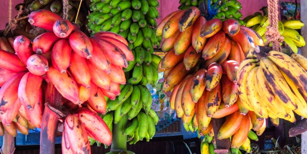 Banane rosse gialle verdi