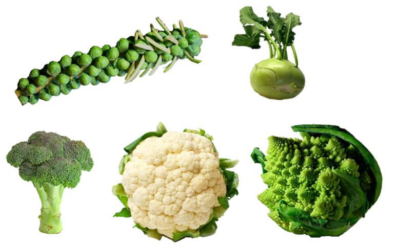 Brassica Bruxelles rapa broccoli cavolfiore