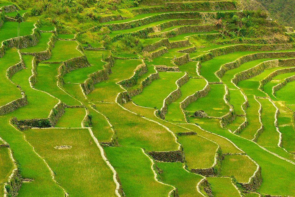Campi terrazzati a riso