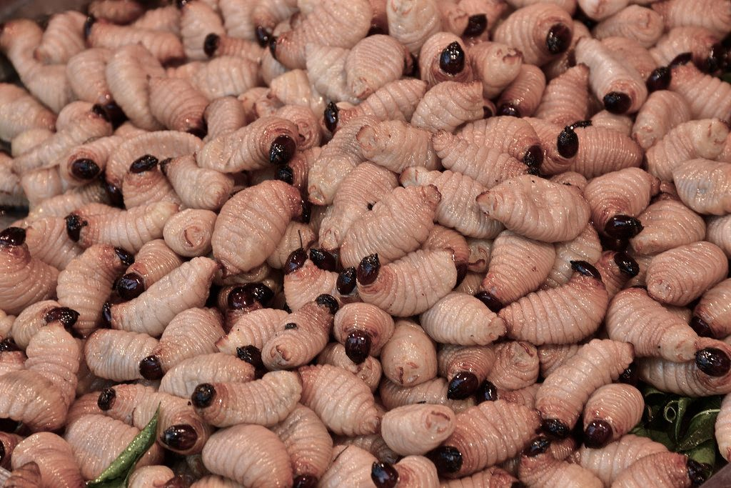 larve insetti da mangiare