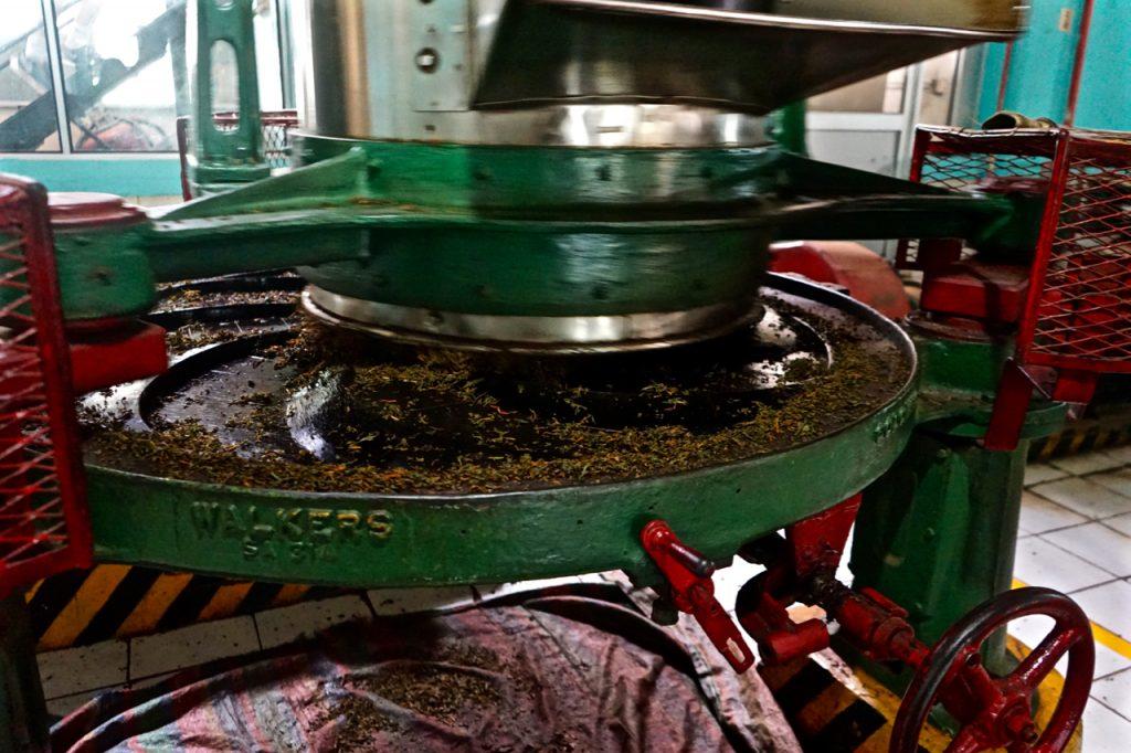 Lavorazione fabbrica di tè Sri Lanka